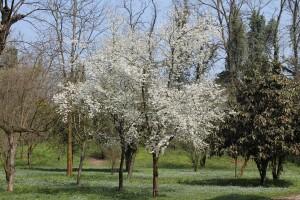 albero bianco in pensione per cani